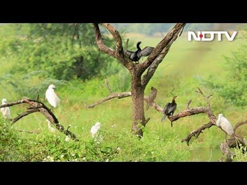 "Bharatpur Bird Sanctuary - A Ride Into The ""Birder's Paradise"""