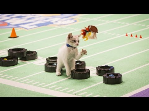 Thumbnail for Cat Video Kitten Bowl II - On Location