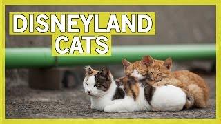 Meet the Cats of Disneyland | Thingamavlogs
