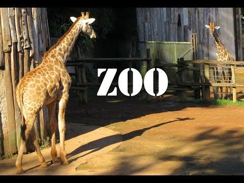 Passeio Zoologico de sp aves macaco girafa tartaruga - São Paulo - zoo