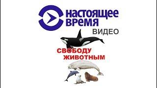 О китовой тюрьме в Настоящее время  _ ВЕЧЕР _ 24.12.18