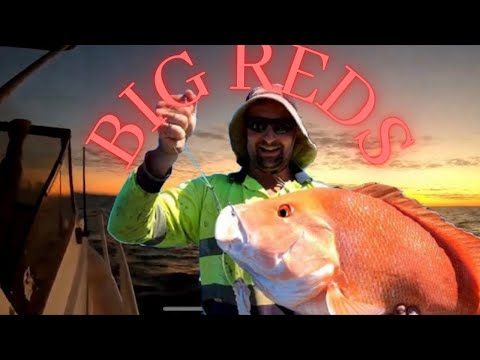 RED EMPEROR FISHING WESTERN AUSTRALIA