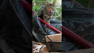 Rescuing a shy street cat 🐾
