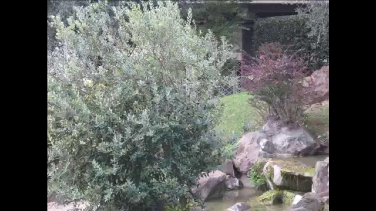 Il giardino dell istituto giapponese di cultura a roma youtube
