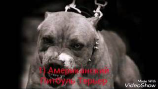 ТОП 5 Самых жестоких бойцовских пород собак !!!!!!