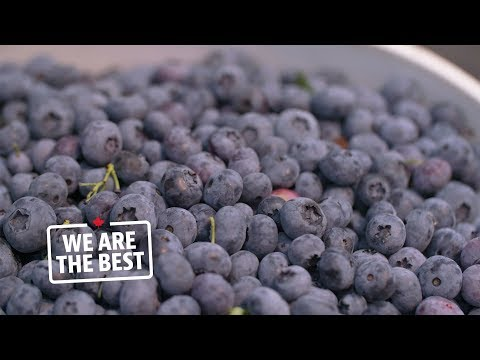 Abbotsford cultivated blueberries, the top Canadian fruit ex