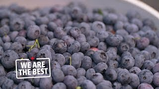 Abbotsford cultivated blueberries the top Canadian fruit export We Are The Best