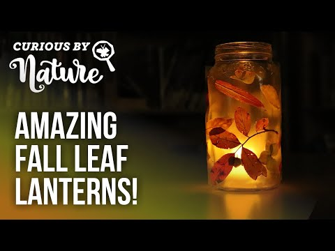 Making Leaf Lanterns (Fall Nature Craft) | Curious By Nature