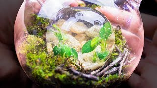 Putting an Ecosphere Inside of a Closed Terrarium