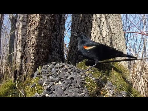 RELAXING My PET - Forest Birds 2 - Bird Videos For Cats and Dogs To Watch - 10 HOURS