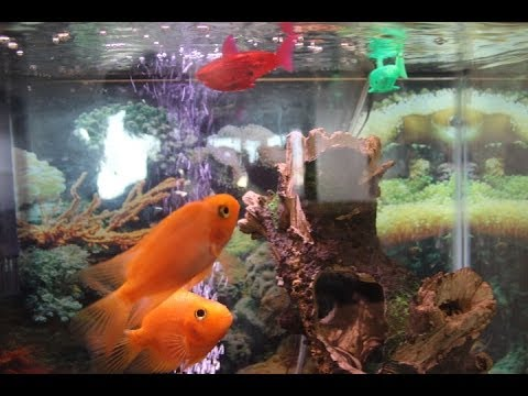 Hexbug aquabot smart fish review real fish tank demo for Aquabot smart fish