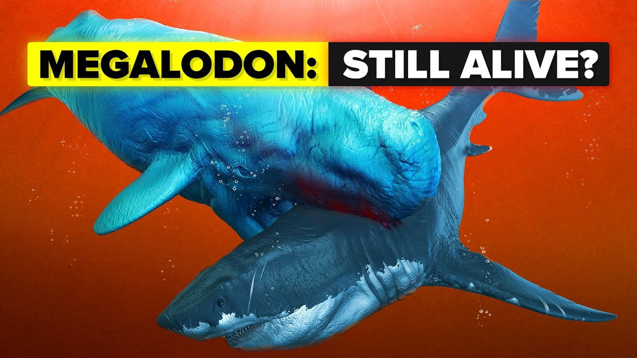 Does The Megalodon Shark Still Live?