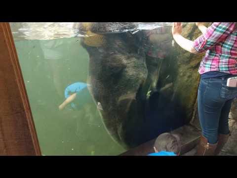 Grizzly..Cheyenne Mountain Zoo