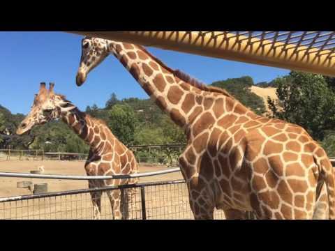 Safari West African Safari Tour