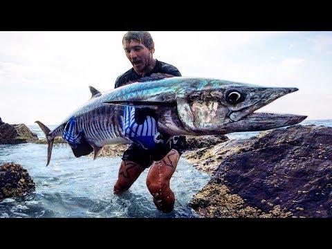 Big Fish Vs Small Lure! Rock Fishing on Steroids