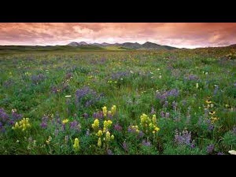Prairie Song by Carl Strommen