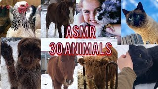 ASMR Meet my 30 ANIMALS