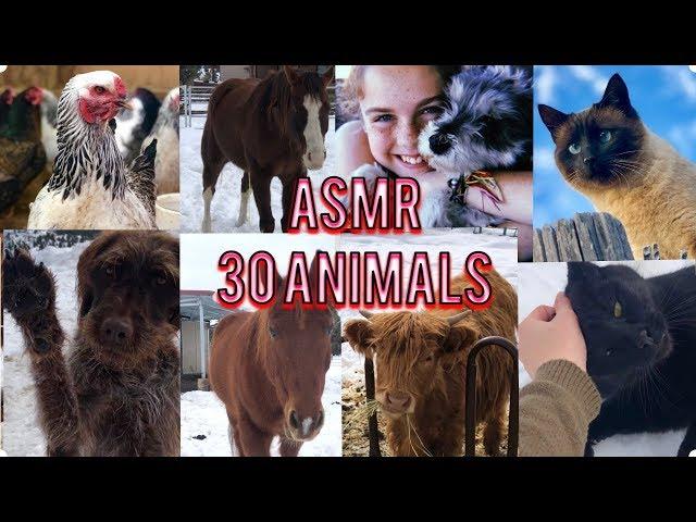 ASMR Meet my 30 ANIMALS