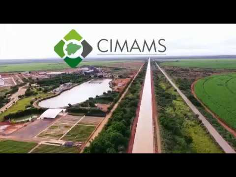 Informativo CIMAMS