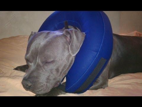 Dog E Cone, Better Alternative.