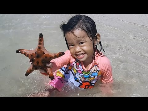 Baby Playing Star Fish and Beach Sand - Donna The Explorer