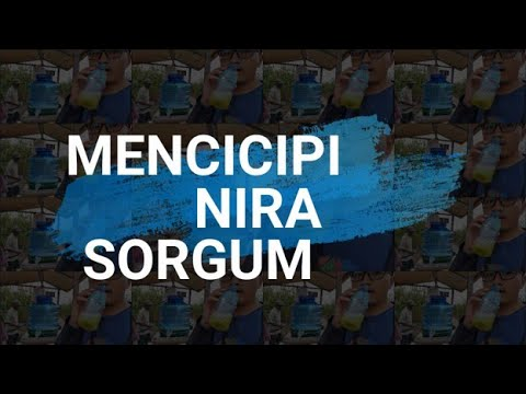 Mencicipi Nira Sorgum-Vlog