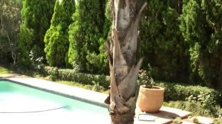 Pretoria Backyard. Претория, задний дворик (polozov 1108)