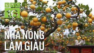 Trồng chanh bonsai đón Tết, thu bạc tỷ mỗi năm | VTC16
