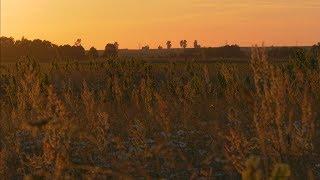 4K UHD | Вечер, закат солнца. Натура. шум травы и сверчки,, успокоение.