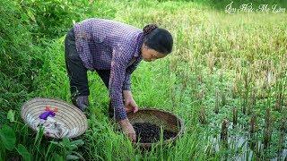 Boiled Vietnamese Snails