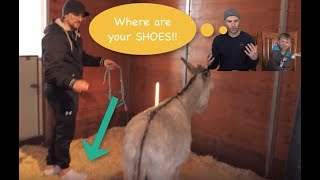 Video review FV Family Donkey in our HOUSE!!! |Van Kids TV