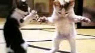 Video kucing joget download MP3, 3GP, MP4, WEBM, AVI, FLV Desember 2017