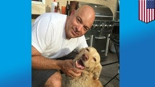 Lost Dog Found: 2 Years Later Golden Retriever Reunited With Owners After Wandering The Wilderness