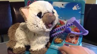 Интерактивный котенок Hasbro Fur Real Friends. Забавный котёнок Ками!!!