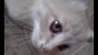 kitties need sex