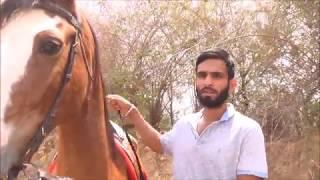 Rs 9 Crore का मारवाड़ी घोड़ा How to make a Horse into a World Champion