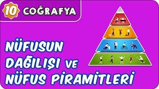 Nüfusun Dağılışı ve Nüfus Piramitleri   10. Sınıf Coğrafya