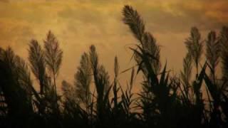 Pájaros de barro (instrumental)