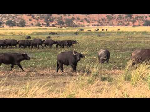 Victoria Falls & Wildlife on the Zambezi & Chobe Rivers