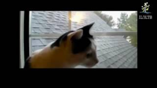 Кошки разговаривают  Забавные кошки  Кошки мяукают  Приколы с кошками