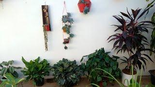 Dicas Para Deixar Suas Plantas Mais Bonitas E Saudáveis