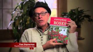 Everyday Roses.  How To Grow Knockout and Other Easy Care Garden Roses. Paul's New Book.