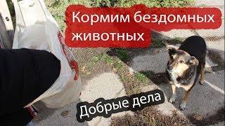 Добрые дела #2. Кормим бездомных животных!