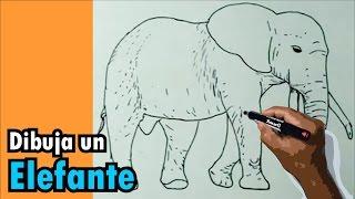 Dibujos de animales 5/8 - Cómo dibujar un elefante - elephant drawing