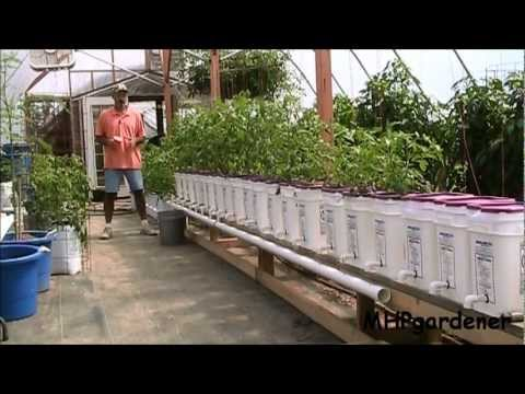 Dutch Bucket Hydroponics How It Works How to Make Your Own