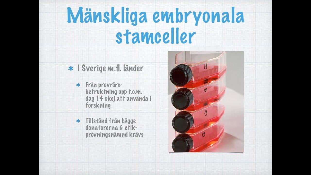 Stamceller och andra cellinjer