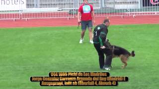 Repeat youtube video 2013 SV BSZS Kassel TSB-Überprüfung Rüden (GHKR) part 6 V41-V50