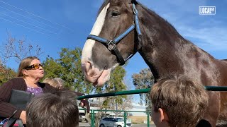 Clydesdale Therapy Helps Special Needs Children & Adults | All Good