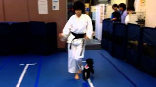 "Canine Freestyle- ""HAPPY"" by Pharell Williams in KARATE 世界中で..."