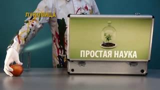 ЛУК ЕСТ КИСЛОРОД